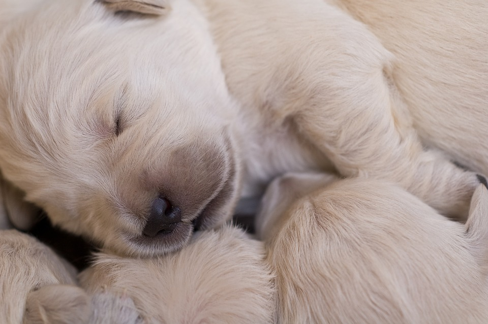 Hunduppfodare