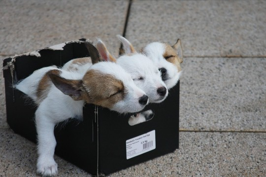 Populara hundraser